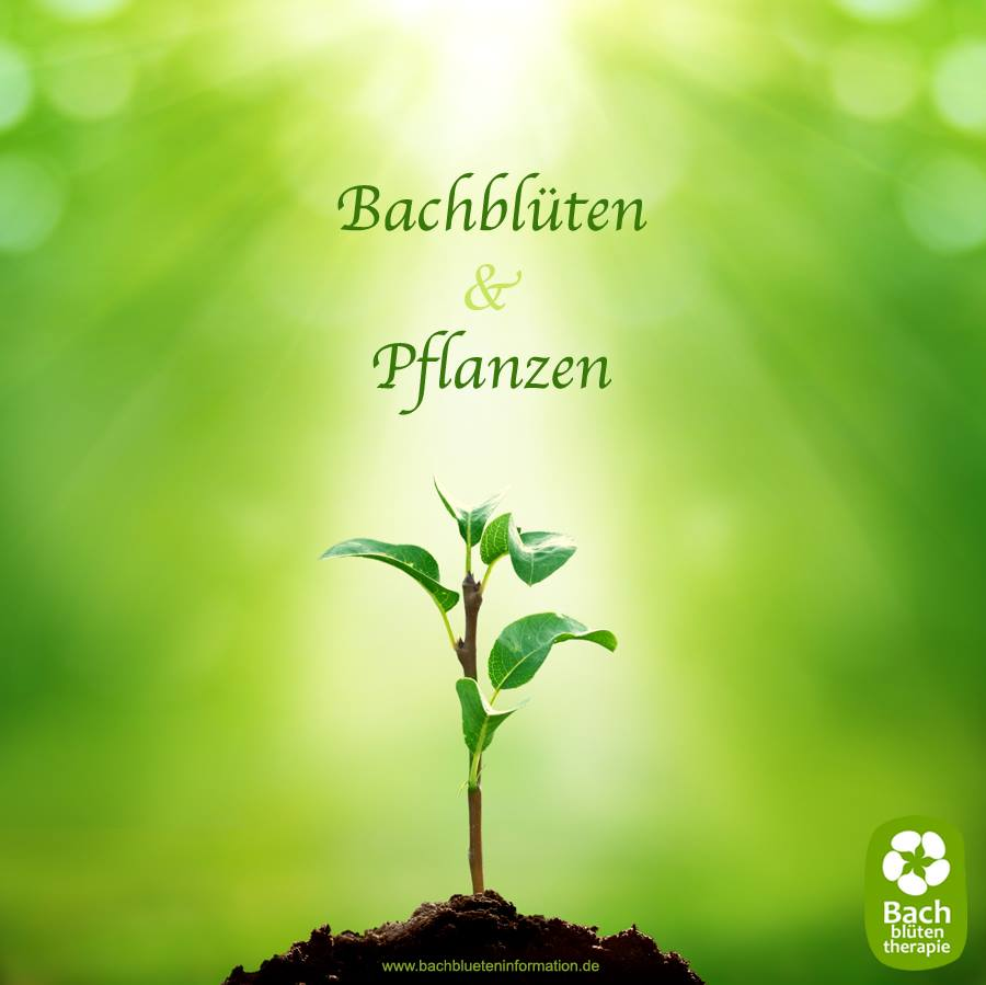 bachbluetenpflanzen